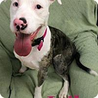 Adopt A Pet :: Julia - Newport, KY