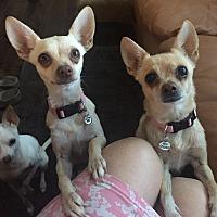 Adopt A Pet :: Mama - calimesa, CA