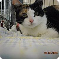 Adopt A Pet :: Brina - Riverside, RI