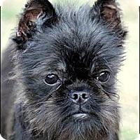 Adopt A Pet :: SAMMY - ADOPTION PENDING! - Little Rock, AR