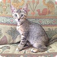 Adopt A Pet :: Lana - Naples, FL