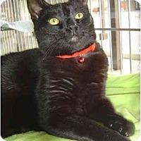 Adopt A Pet :: Sophie - Modesto, CA