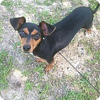 Adopt A Pet :: Lady - Silsbee, TX