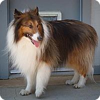 Adopt A Pet :: Jessie - Riverside, CA
