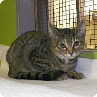 Adopt A Pet :: Fluffy Face - Dover, OH