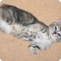 Adopt A Pet :: Hydra - Sunderland, ON