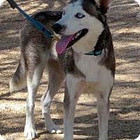 Adopt A Pet :: Emmalee (Courtesy Listing) - Scottsdale, AZ