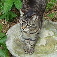 Adopt A Pet :: Anjie - Naples, FL