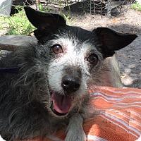 Adopt A Pet :: Jackmix#2F (Isabella) - Orlando, FL