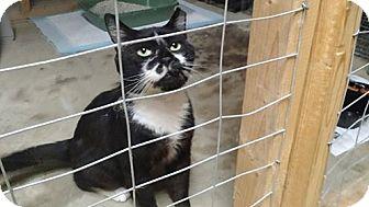 Domestic Shorthair Cat for adoption in Wakinsville, Georgia - Boyfriend