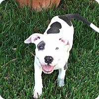 Adopt A Pet :: Sky - Ft. Myers, FL
