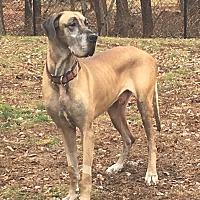 Adopt A Pet :: Otis - Boonton, NJ