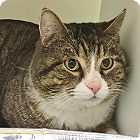 Adopt A Pet :: Maui - Salisbury, MA