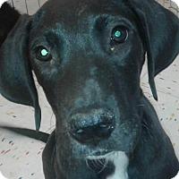 Adopt A Pet :: Jonzz Orlando Chapter - Orlando, FL