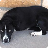 Adopt A Pet :: Gerry - Artesia, NM