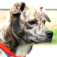 Adopt A Pet :: Finnigan - Glastonbury, CT