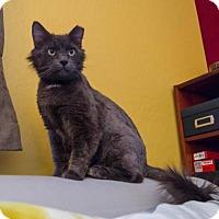 Adopt A Pet :: Patch - Chandler, AZ