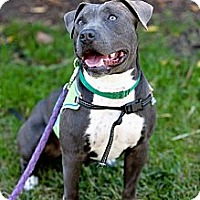 Adopt A Pet :: Lolita - Mission Viejo, CA
