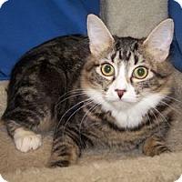 Adopt A Pet :: K-Carla2-Irma - Colorado Springs, CO