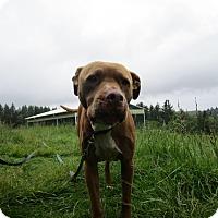 Adopt A Pet :: Faith - Tillamook, OR