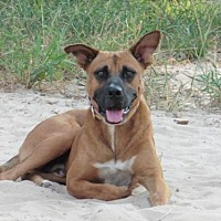 Adopt A Pet :: Rusty - San Antonio, TX