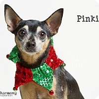 Adopt A Pet :: Pinkie Pie - Phoenix, AZ