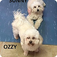 Adopt A Pet :: Ozzy & Sunny - Sinking Spring, PA