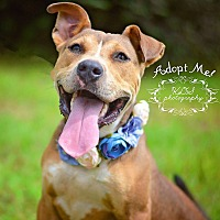 Adopt A Pet :: Jasmine - Fort Valley, GA