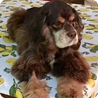 Adopt A Pet :: Huntley - Sugarland, TX