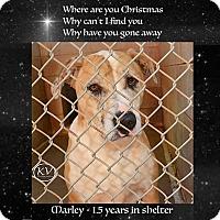 Adopt A Pet :: Marley - Sautee, GA