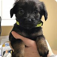 Adopt A Pet :: Green - Zanesville, OH