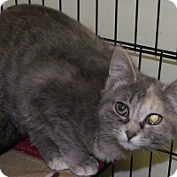 Adopt A Pet :: cupid - Muskegon, MI