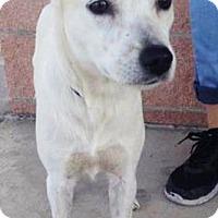 Adopt A Pet :: Luna - Mt. Prospect, IL