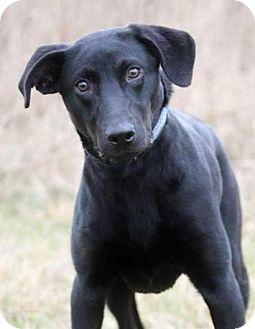 Labrador Retriever Mix Dog for adoption in Pardeeville, Wisconsin - Dani