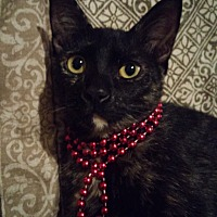 Adopt A Pet :: Bell - Houston, TX