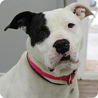 Adopt A Pet :: Abigail (TIA) - Washington, DC