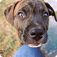Adopt A Pet :: Patriot - Orlando, FL