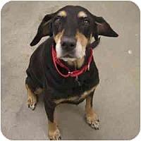 Adopt A Pet :: Mina - Phoenix, AZ