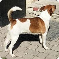 Adopt A Pet :: Annie - Oberlin, OH