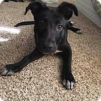 Adopt A Pet :: Annie - Allen, TX