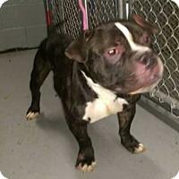 Adopt A Pet :: Yoda - Wenonah, NJ