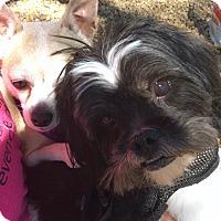 Adopt A Pet :: Harley & Lucy - Phoenix, AZ