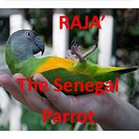Adopt A Pet :: RAJA The Senegal Parrot - Vancouver, WA