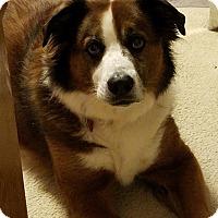 Adopt A Pet :: Murphy - Rockville, MD