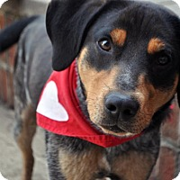 Adopt A Pet :: Tobay - Fairfax Station, VA