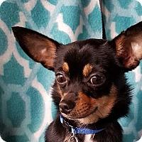 Adopt A Pet :: Pascal - San Antonio, TX