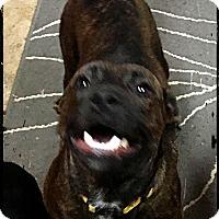 Adopt A Pet :: GiGi - Bastrop, TX