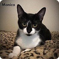 Adopt A Pet :: Monica - Newport, KY