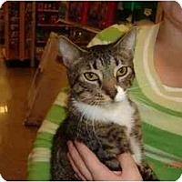 Adopt A Pet :: Frazier - Orlando, FL