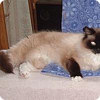 Adopt A Pet :: Pete - Acworth, GA